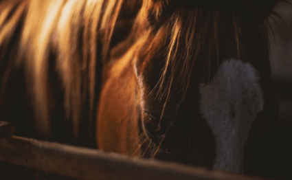 Developing a Daily Routine For Your Horse